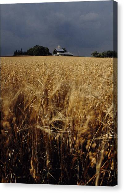 Storm Over Wheat Field  Canvas Print