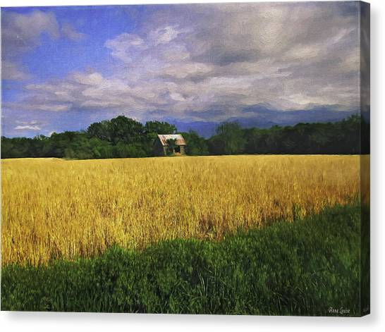 Stormy Old Barn In Wheat Field 2 Canvas Print