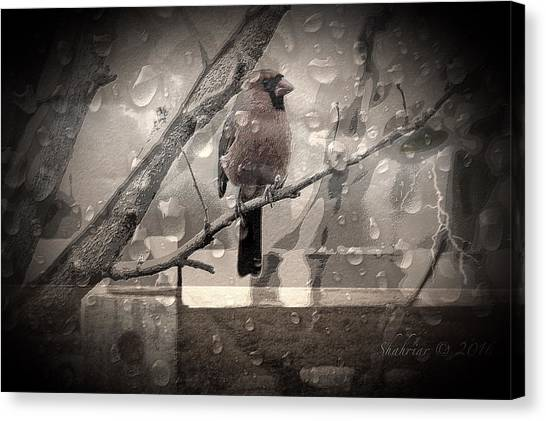 Stormy Window Canvas Print