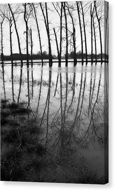 Stranded Trees Canvas Print