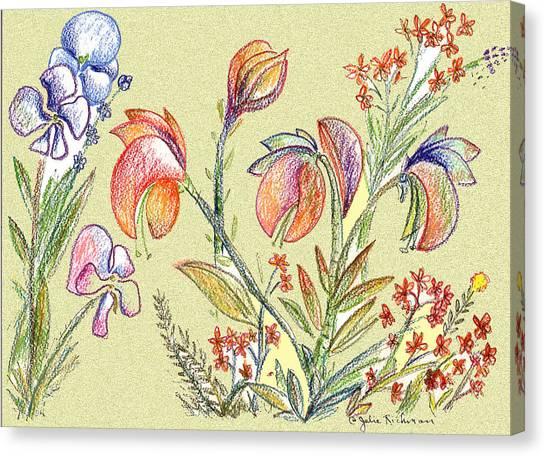 Strange Orchid Drawing Canvas Print by Julie Richman