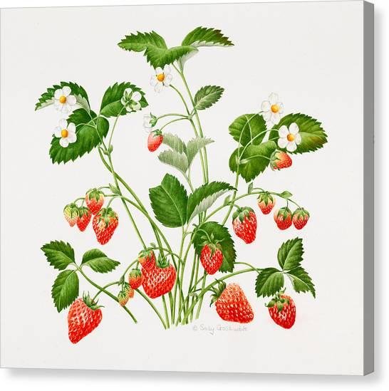 Wild Berries Canvas Print - Strawberry Plant by Sally Crosthwaite