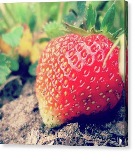 Berries Canvas Print - #strawberry #yummy #food #delicious by Rincis Rinalds