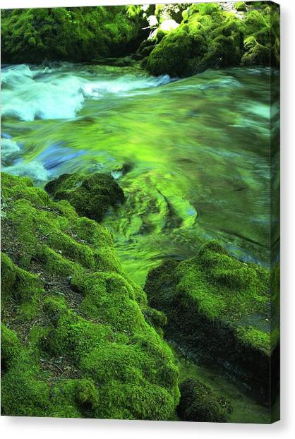 Stream Above Whitehorse Falls Canvas Print