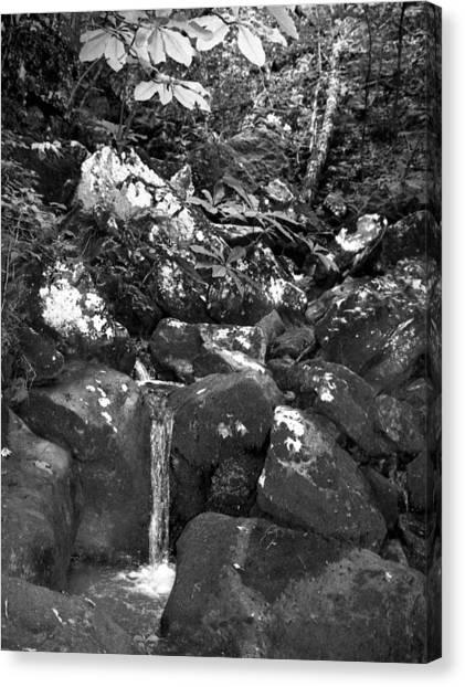Stream Canvas Print by Curtis J Neeley Jr