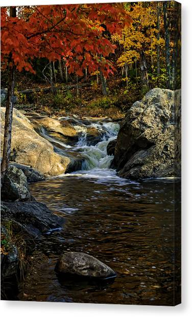 Stream In Autumn No.17 Canvas Print
