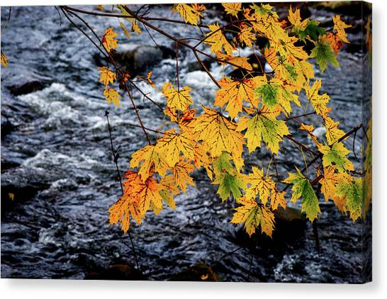 Stream In Fall Canvas Print