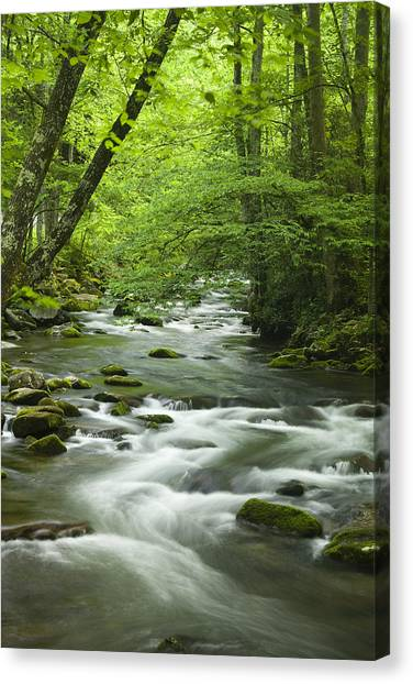 Rivers Canvas Print - Stream In The Smokies by Andrew Soundarajan
