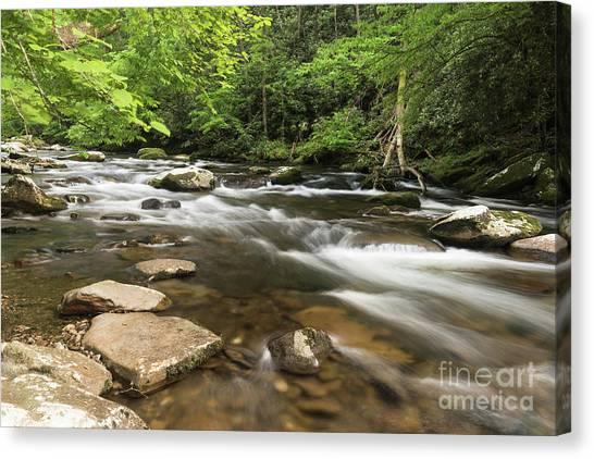 Stream In The Smokies Canvas Print