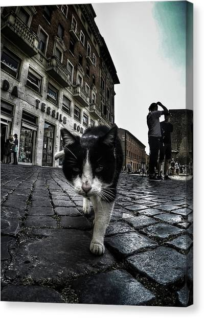 Street Canvas Print - Street Cat by Nicklas Gustafsson