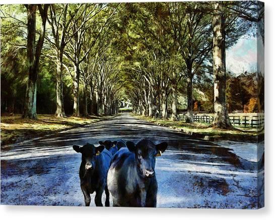 Street Cows Canvas Print