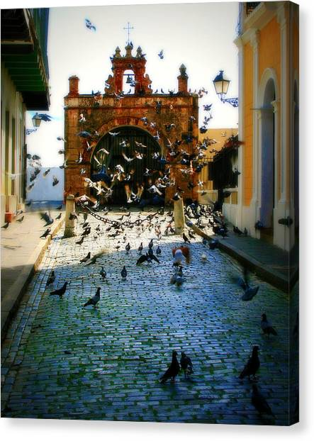 Pavers Canvas Print - Street Pigeons by Perry Webster