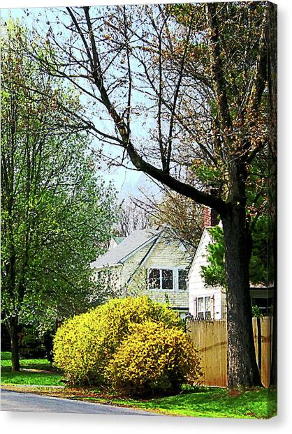 Street With Forsythia Canvas Print by Susan Savad