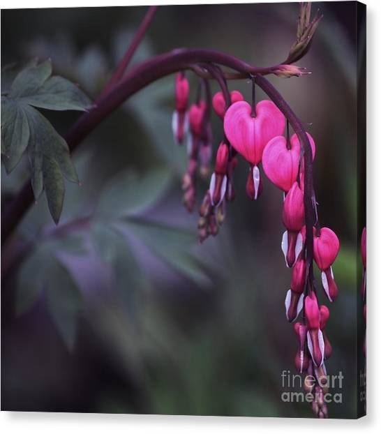 String Of Hearts 2 Canvas Print