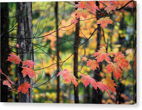 Stringing Up The Colors Canvas Print