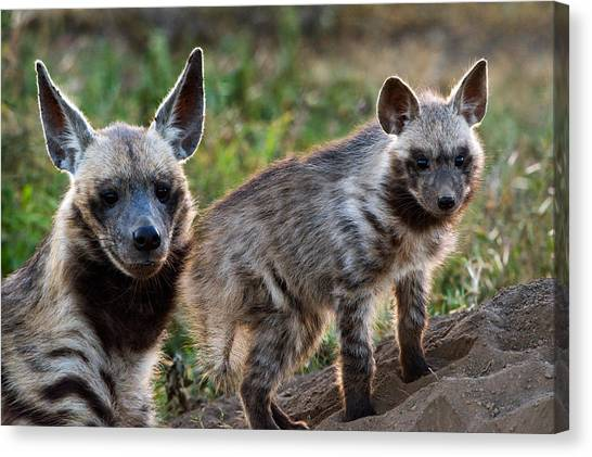 Hyena Canvas Print - Striped Hyena Hyaena Hyaena by Panoramic Images