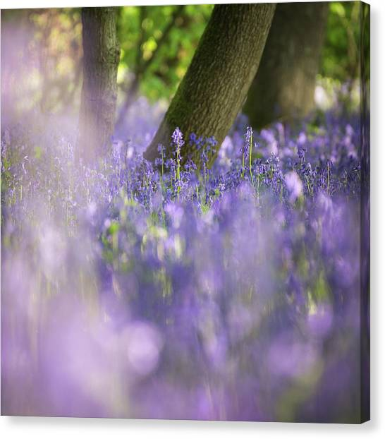 Sherwood Forest Canvas Print - Striving by Chris Dale