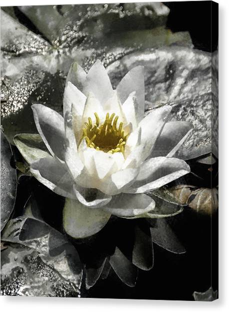 Strokes Of The Lily Canvas Print