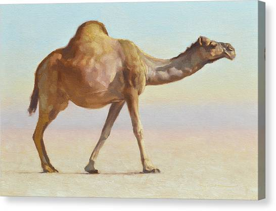 Camels Canvas Print - Strolling by Ben Hubbard