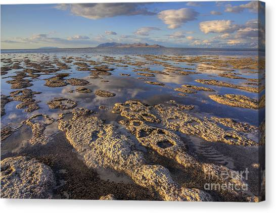 Stromatolites And Antelope Island Canvas Print