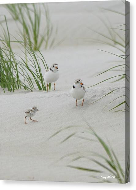 Struggle In The Blowing Sand Canvas Print