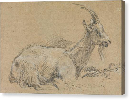 Goats Canvas Print - Study Of A Goat by Thomas Gainsborough