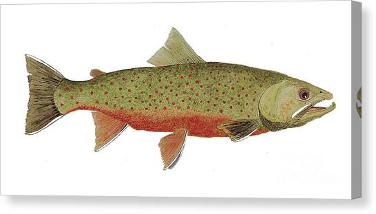 Study Of A Male Dolly Varden Char Canvas Print