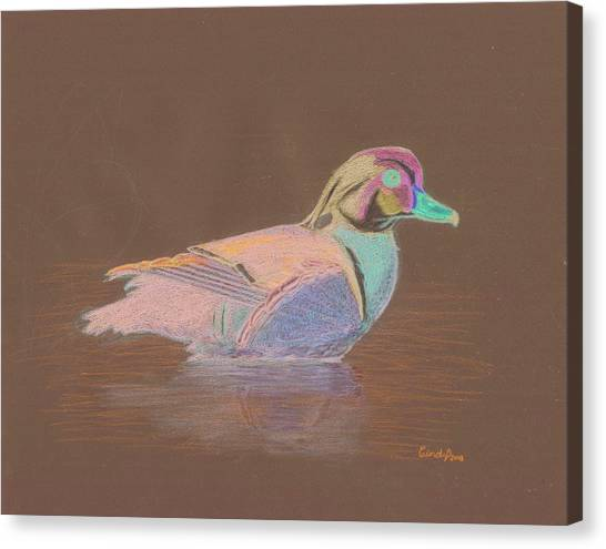 Study Of A Wood Duck Canvas Print by Cynthia  Lanka