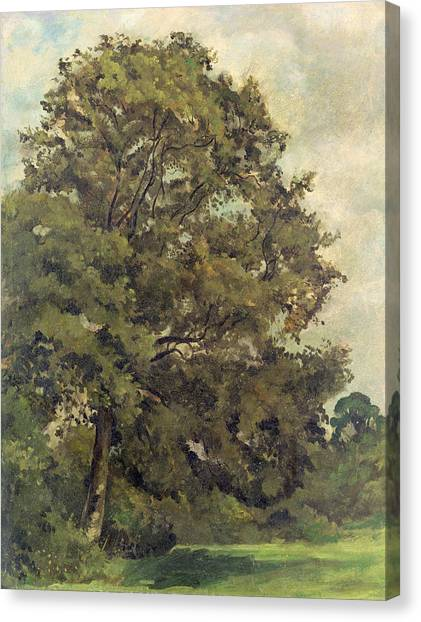 Ashes Canvas Print - Study Of An Ash Tree by Lionel Constable
