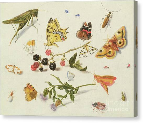 Grasshoppers Canvas Print - Study Of Insects, Flowers And Fruits, 17th Century by Ferdinand van Kessel