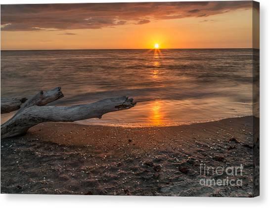 Stump Sunset Canvas Print