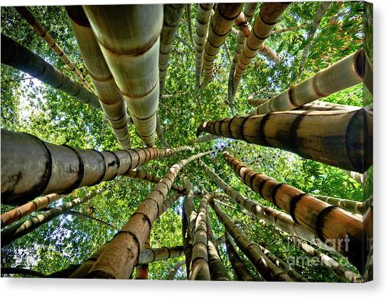 Stunning Bamboo Forest - Color Canvas Print