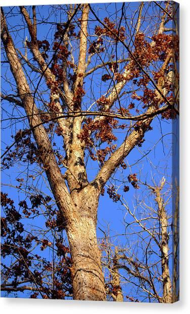 Stunning Tree Canvas Print