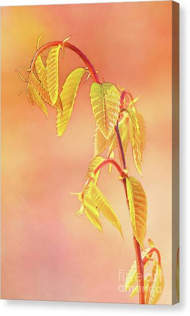 Stylized Baby Chestnut Leaves Canvas Print
