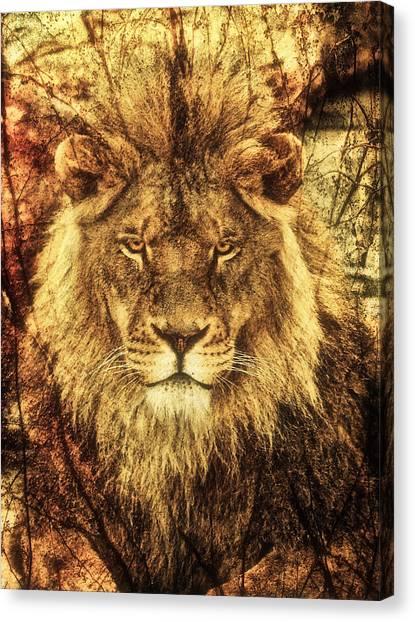 Subtle Lion Canvas Print