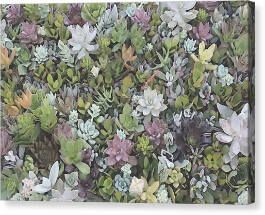 Succulent 8 Canvas Print