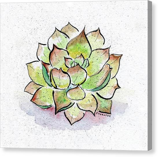 Cactus Canvas Print - Succulent by Diane Thornton