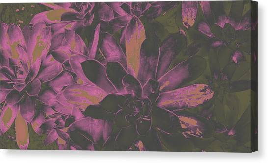 Succulents #3 Canvas Print