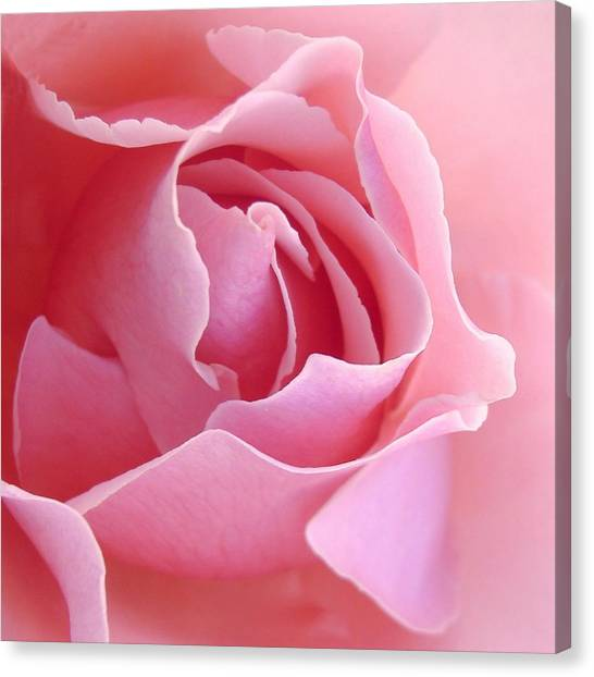 Abstract Rose Canvas Print - Sugar Of Rose by Jacqueline Migell