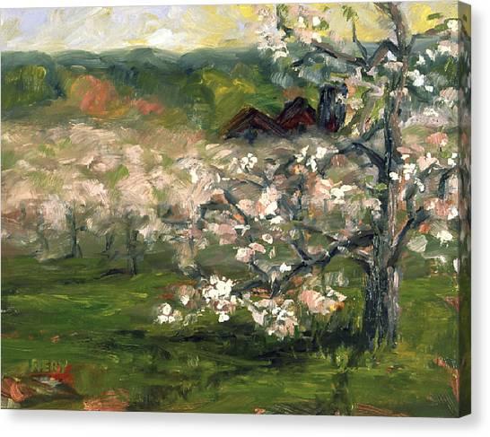 Sullivan's Orchard Canvas Print