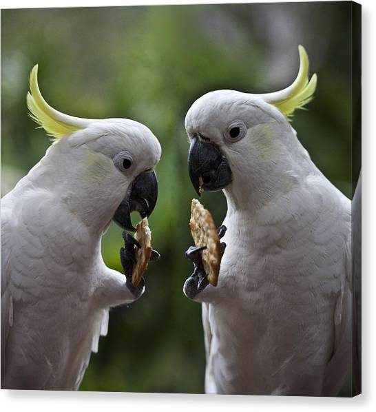 Cockatoo Canvas Print - Sulphur Crested Cockatoo Pair by Sheila Smart Fine Art Photography