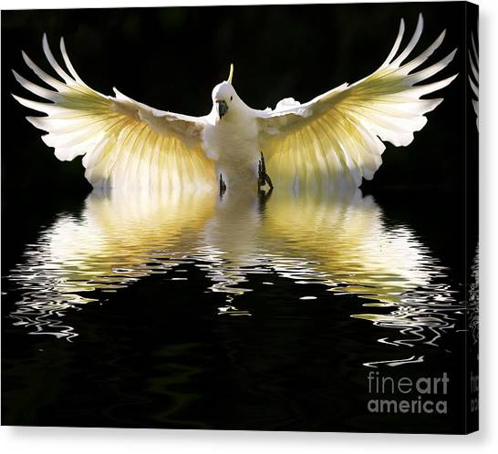 Cockatoo Canvas Print - Sulphur Crested Cockatoo Rising by Sheila Smart Fine Art Photography