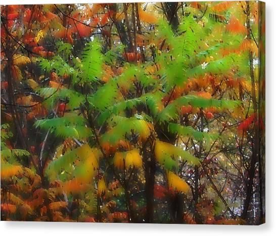Sumac 7378 Canvas Print