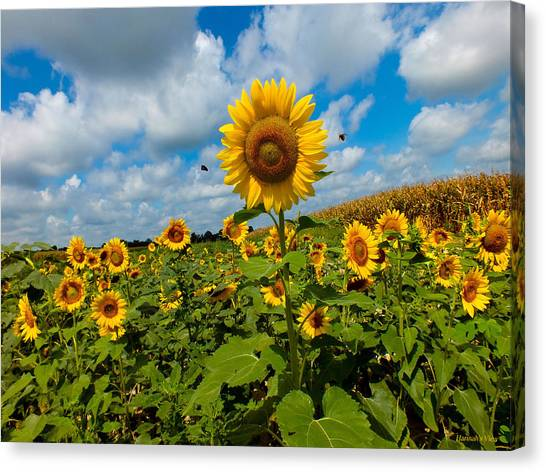 Summer At The Farm Canvas Print