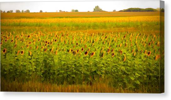 Summer Blooms Canvas Print by Robert  McCord