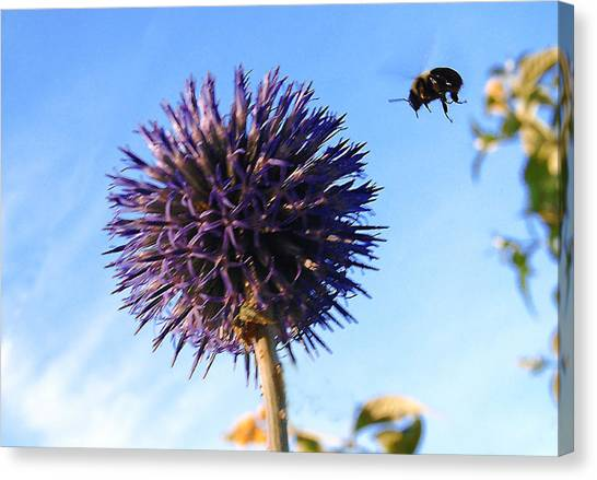 Canvas Print featuring the photograph Summer Busy Bee by Roger Bester