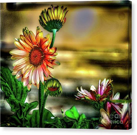 Summer Daisy Canvas Print