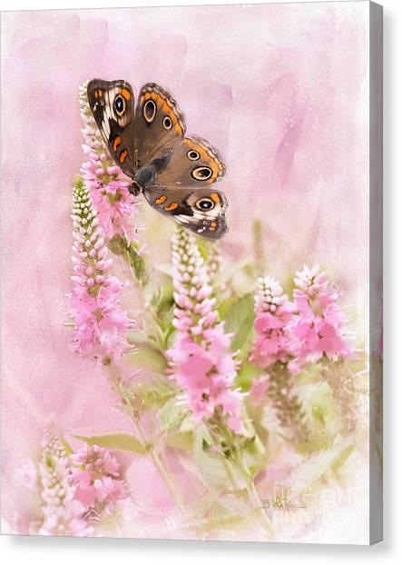 Buckeye Butterfly Canvas Print - Summer Daze by Betty LaRue