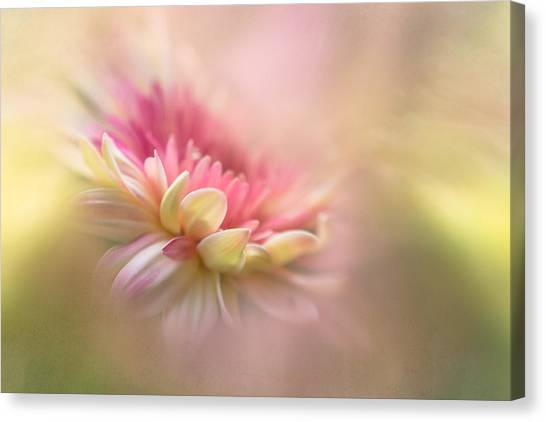 Summer Flowers Canvas Print - Summer Dreaming by Penny Myles