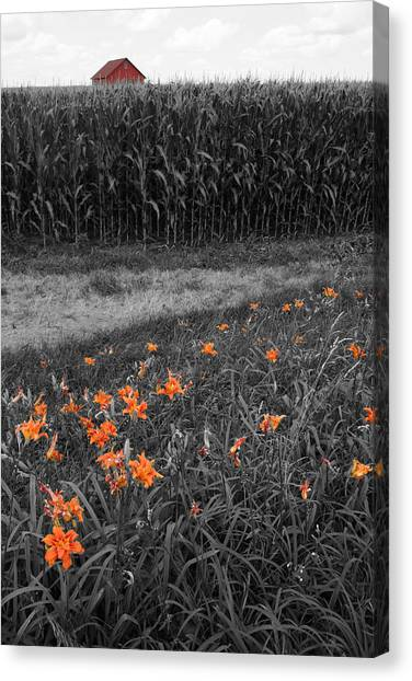 Canvas Print featuring the photograph Summer Fields by Dylan Punke